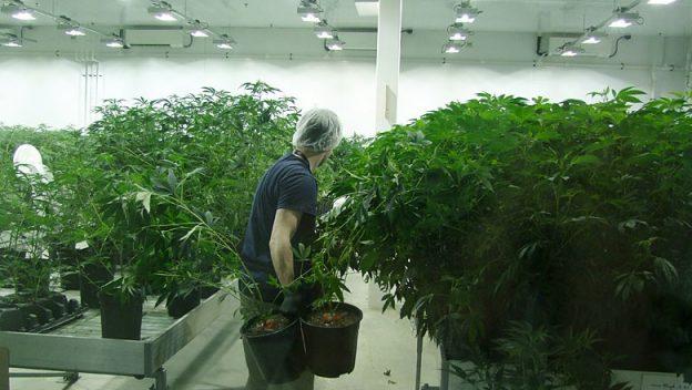 tweed-plants-marijana