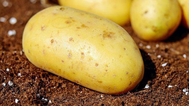 garden-potatoes