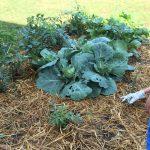 The Lanark County Great Veggie Grow-off kicks off May 1