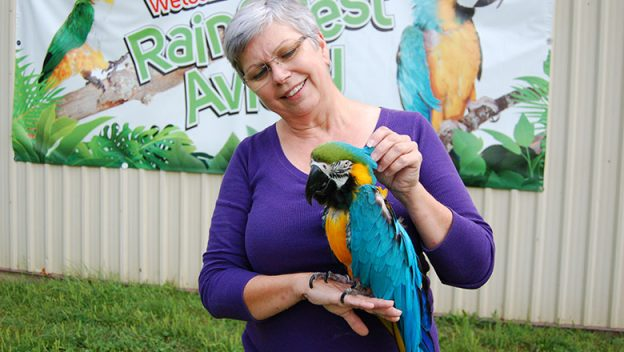Lady holding a colourful parrot.