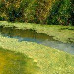 Mississippi Lakes Association Commissions algae study