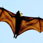 Health unit raises awareness about bats and rabies