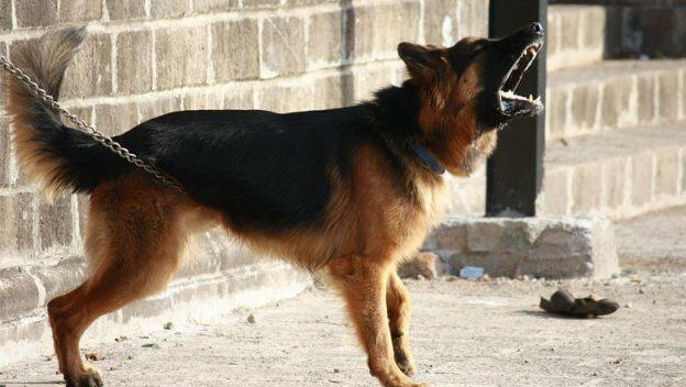 barking-dog-noise