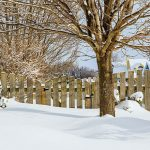 Garden Matters: 10 tips for preparing your lawn and garden for winter