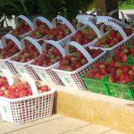 Life on the Farm: Strawberries