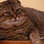Perth council dedicates $4,000 for cat pound services pilot project