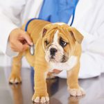 Town of Smiths Falls Business Recruitment and Expansion Media Series: Lanark Vet Clinic