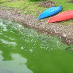 Potentially harmful algal blooms