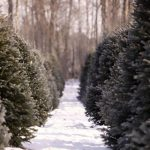 3rd annual Ladies Night at Cedar Hill Christmas Tree Farm
