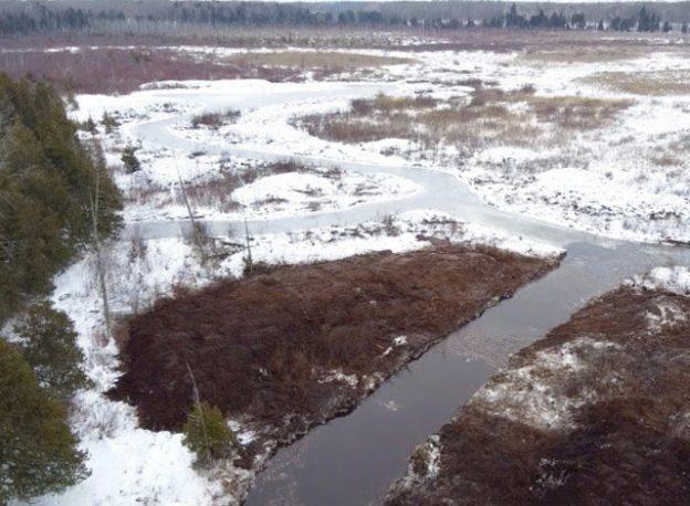 Hutton Creek Marsh