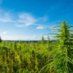 Lanark County supports request to change cannabis rules