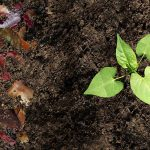 Council declines request to offer compost to the public