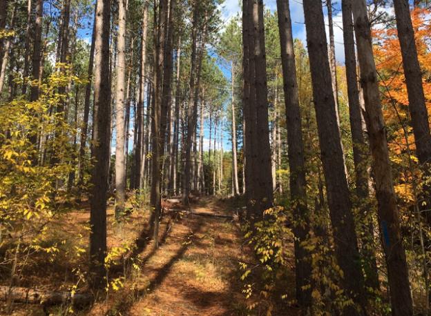 Baird Trail